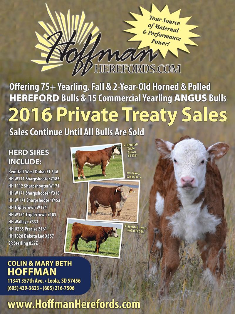 Hoffman Herefords Catalog